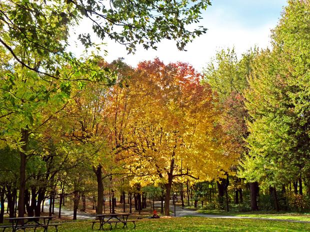 Mont-Royal en automne