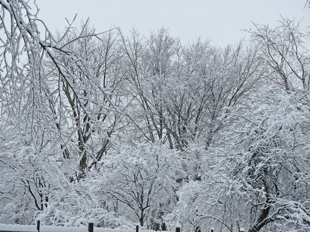Chute de neige