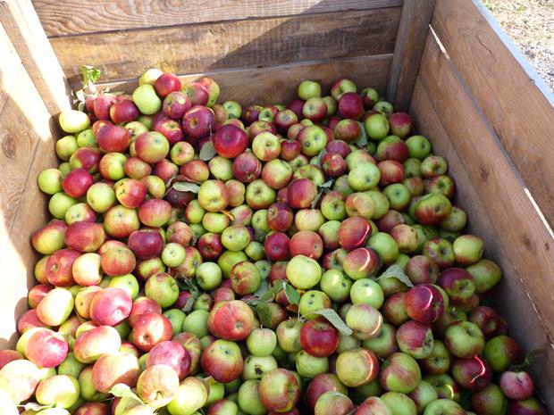 Journée Pomme
