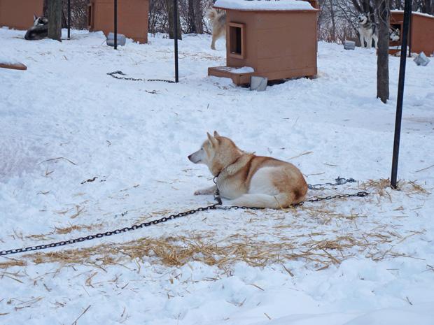 Fête des neiges