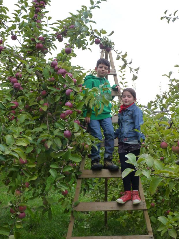 Pommes-2014-06