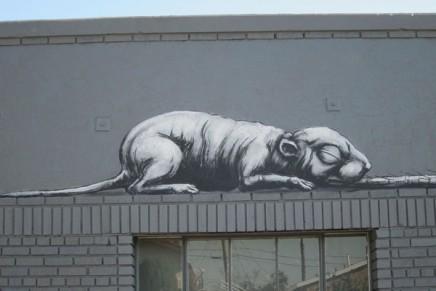 Les animaux géants de Roa