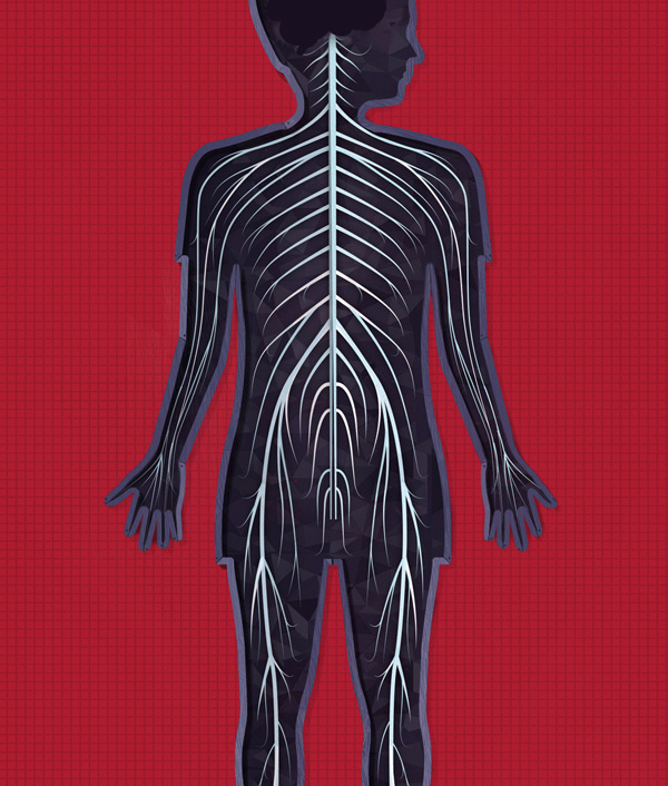 The human body App by Tinybop