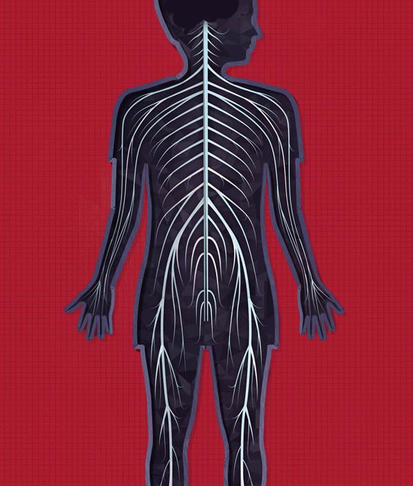 The human body App by Tinybop