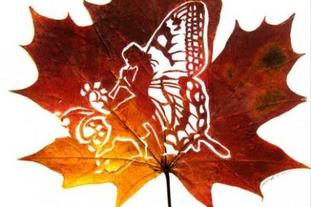 Omid Asadi – De feuilles mortes à oeuvres d'art