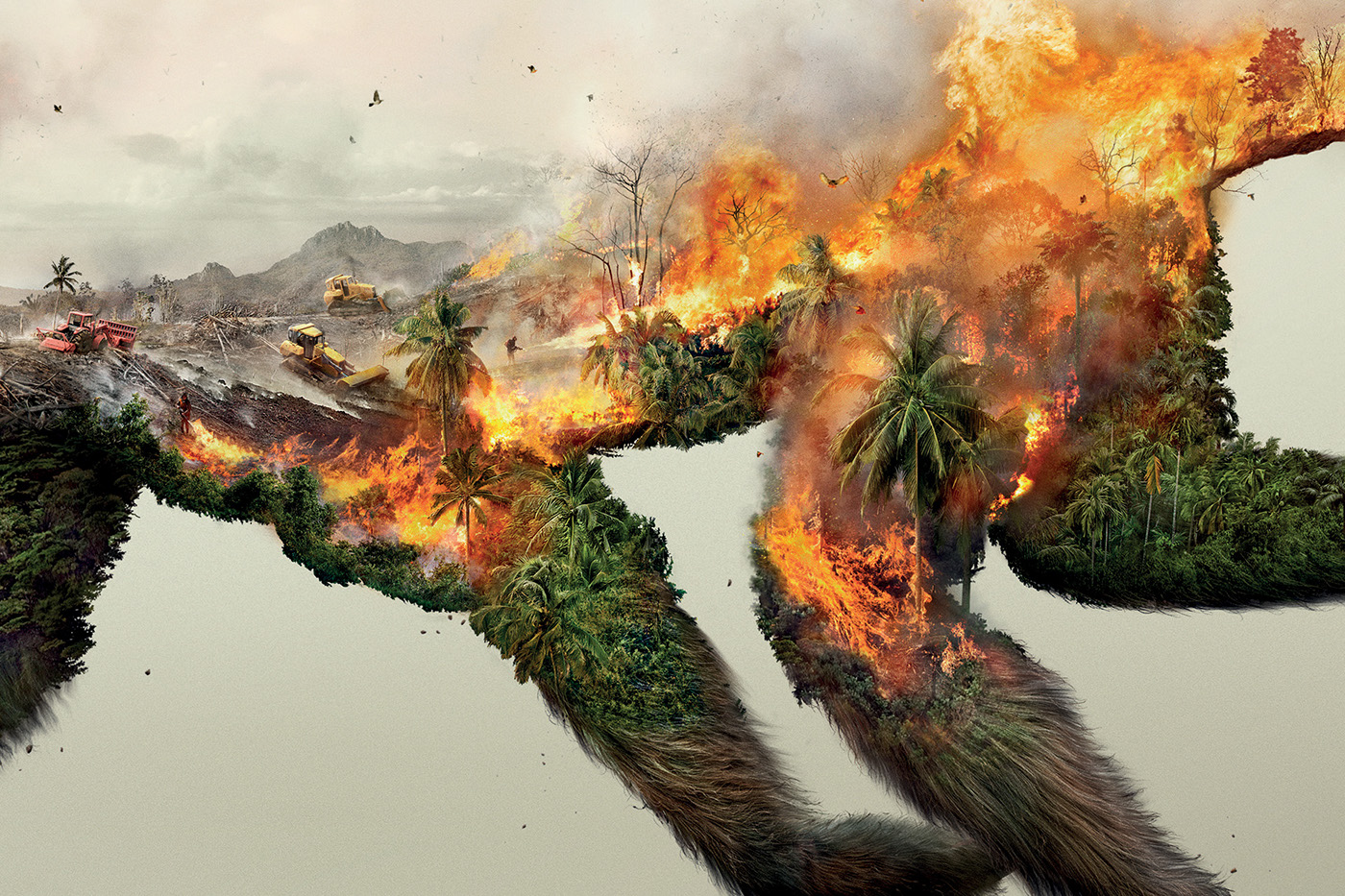 Destroying nature is destroying life robin wood